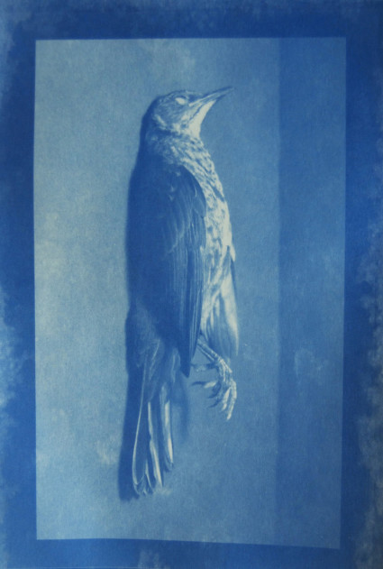 Maeve Coulter - Cyanotype