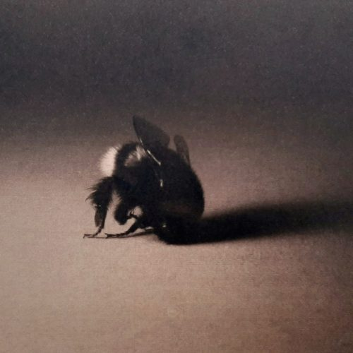Maeve Coulter Cyanotype Bee (detail)